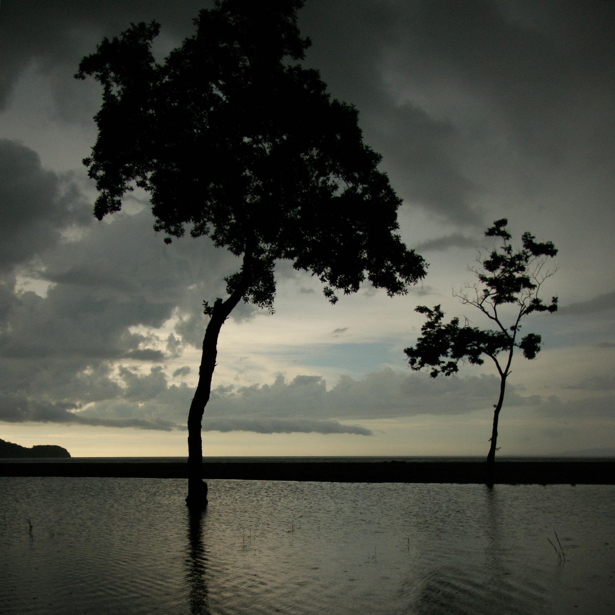 natuur, bomen in silhouet, Studio MT