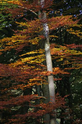 natuur, bomen in herfstkleur, Studio MT