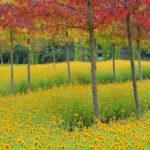 natuur, herfstkleur