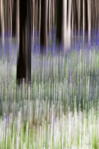 natuur, bomen abstract, Studio MT