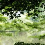 natuur, bladeren