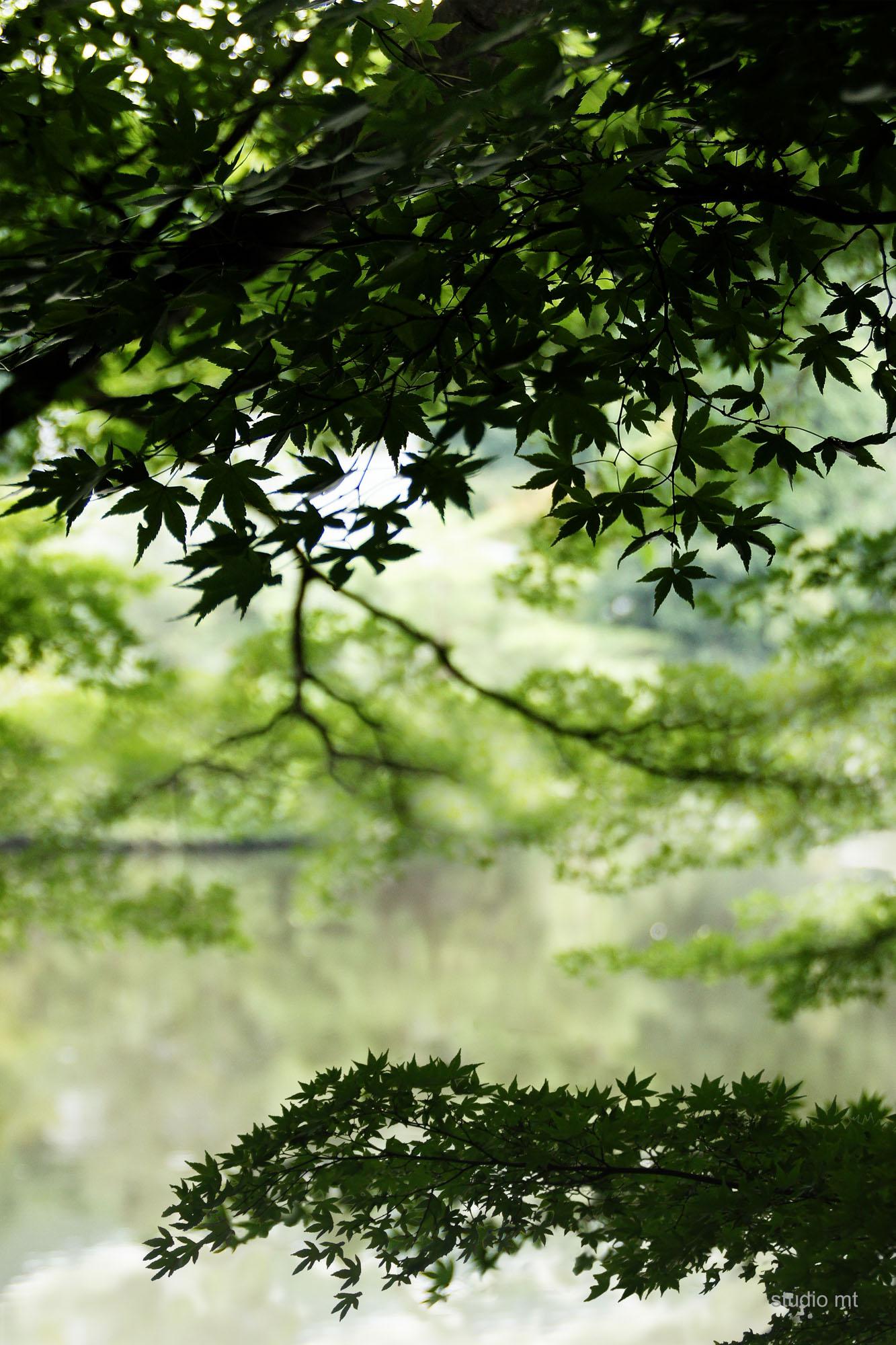 natuur, Japanse esdoorn, Studio MT
