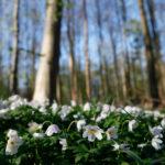 natuur, lente